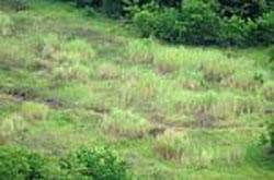 grass-100197801